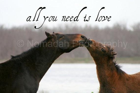 Kissing wild horses