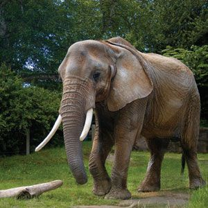 Woodland Park Zoo Discount Admission Tickets | Seattle CityPASS® Attraction