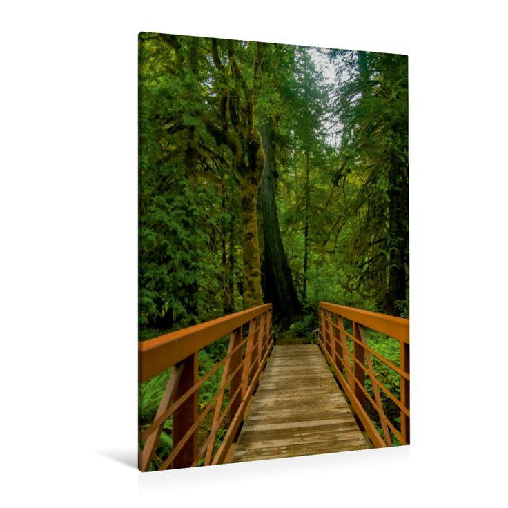 Falls View Trail, Olympic Nationalpark - CALVENDO