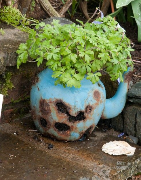 Lip na Cloiche garden on MullAncient Teapots, Mulled, Cafes, Lips, Cloich Agrden, Cloich Gardens