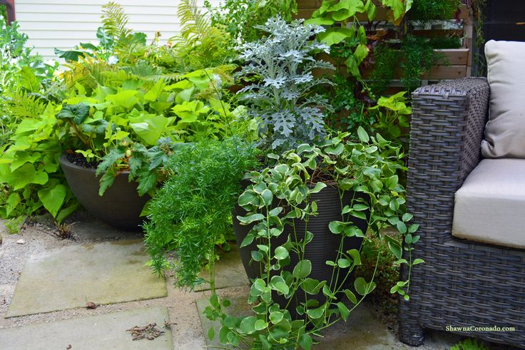 710 best patio pots and containers images on pinterest for Organic container gardening