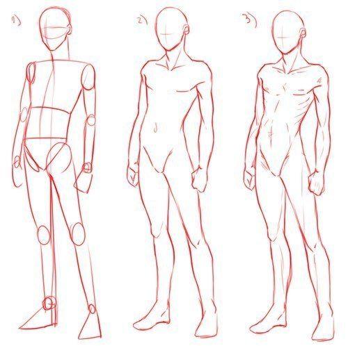 Учебник. Мужское тело и его пропорции/позы   99 фотографий