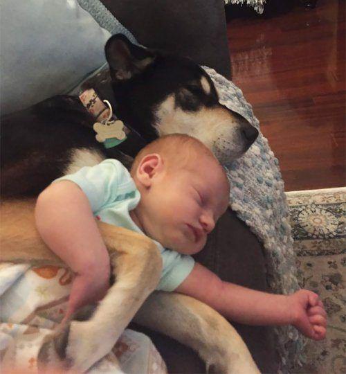 Очаровательные спящие малыши и их собаки
