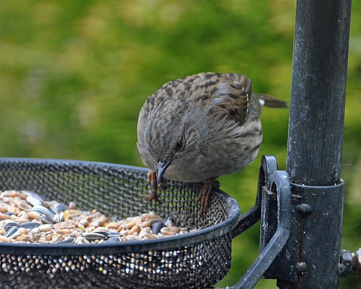 17 best ideas about bird feeding station on pinterest. Black Bedroom Furniture Sets. Home Design Ideas