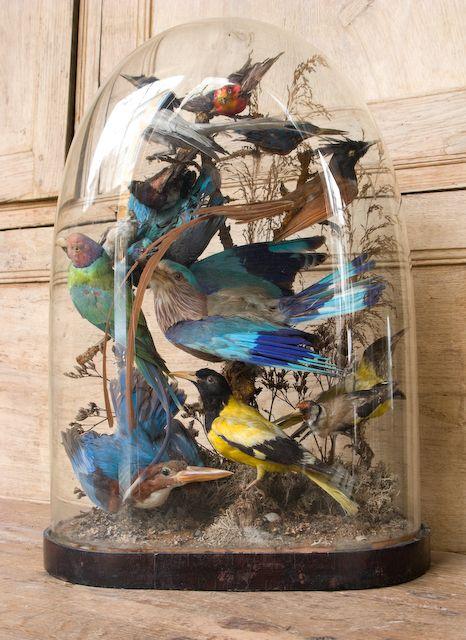 Victorian taxidermy bird domes