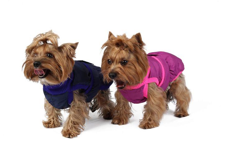 Фотосъемка одежды и товаров для собак