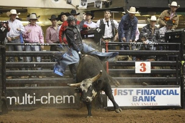 Funny Bull Riding Quotes: Best 10+ Bull Riding Quotes Ideas On Pinterest