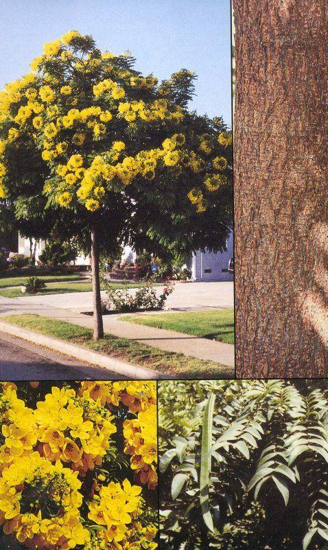 19 best california native plants for shade  under oaks images on pinterest
