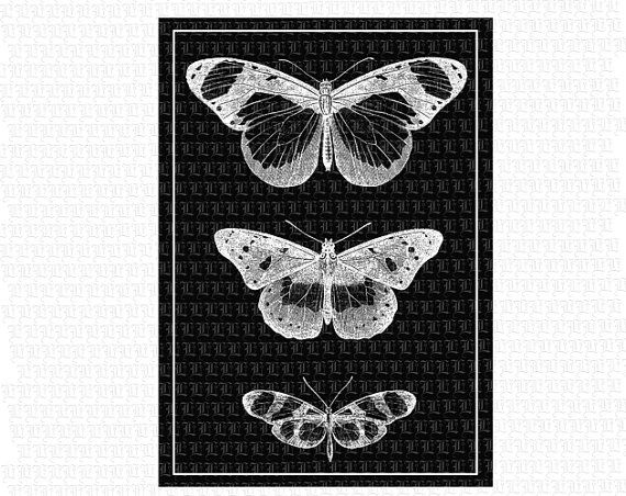 ButterFlies Insects ClipArt Digital Collage by luminariumgraphics, $3.20