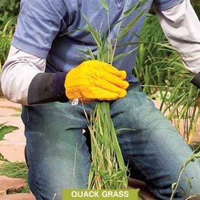 how to get rid of weeds in lawn in spring