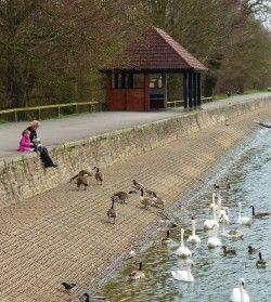 Coate Water, Swindon, Wiltshire, England