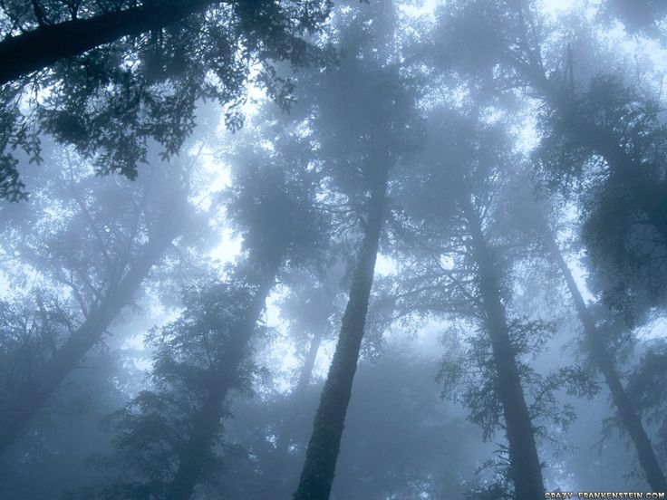 Forest wallpapers - Nature wallpapers - Crazy Frankenstein - Wallpaper Zone