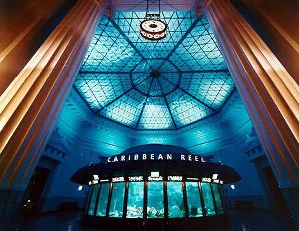 Shedd Aquarium | Team Martinez visits the Shedd Aquarium in Chicago (2012 ...