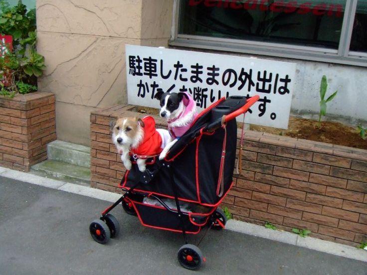 La poussette (double) pour chiens