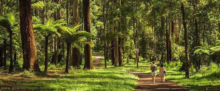 Parks Victoria - Dandenong Ranges National Park