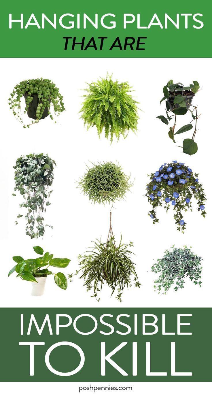 Die 9 besten Indoor-Hängepflanzen, die selbst Anfänger nicht töten werden