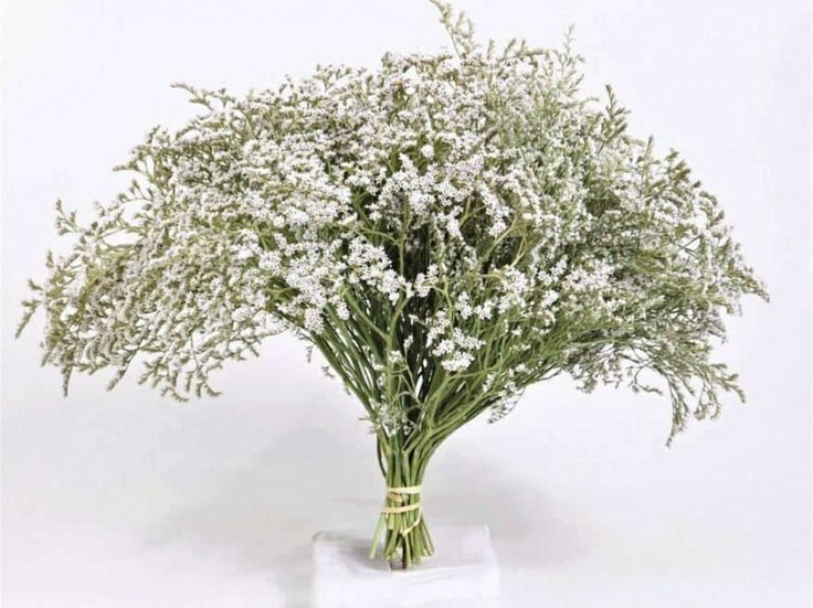 130 best cutting gardens images on pinterest pot plants container white statice mightylinksfo Images