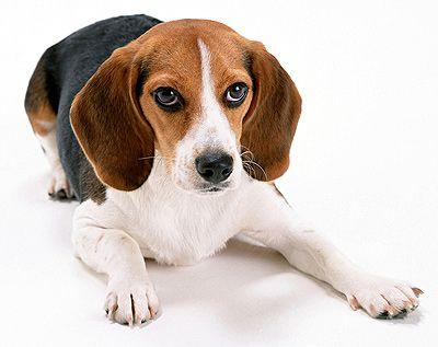 собаки - Поиск в Google
