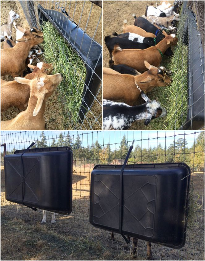 I'll start with my favorite hay feeder, it's homemade and it's the cheapest. I got a cement mixing tub at Home Depot for $12.98 & a bungee cord. They work awesome and are easily moved and clipped wherever I need them, simple as that.