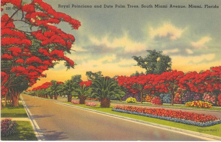 Vintage Florida Linen Postcard Miami Royal Poinciana Date Palm Trees South