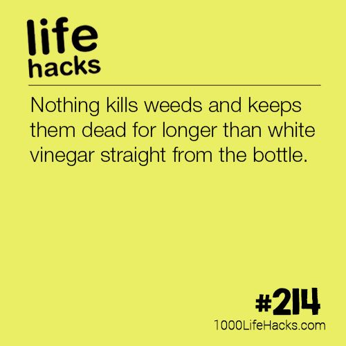 The post #214 – The Best Way To Kill Weeds appeared first on 1000 Life Hacks.
