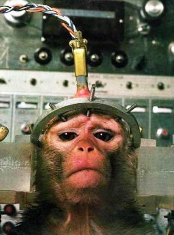 BROKEN MY HEART - PLEASE NO TESTS ANIMALS