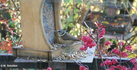 Füttern am Balkon LBV Vögel Futterhaus vögel Haubenmeise