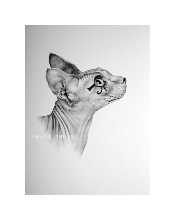 Sphynx Cat Pencil Drawing Print Hand Signed