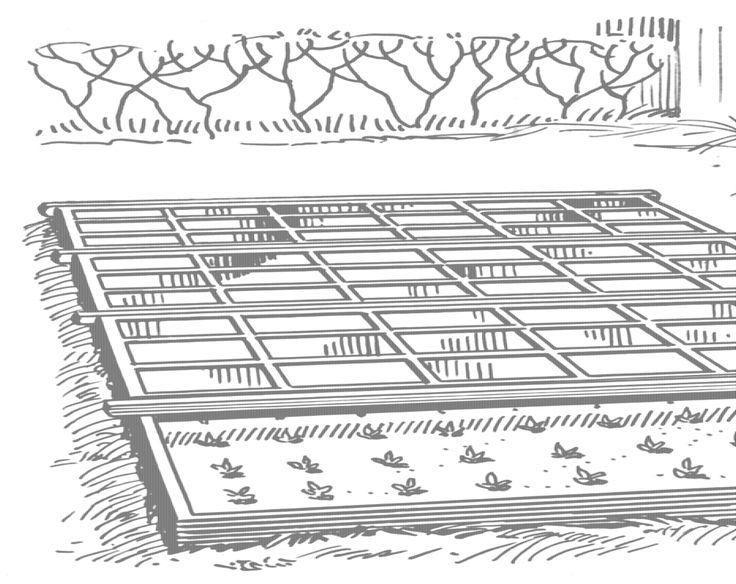 Ecco come fare il #semenzaio per gli ortaggi di gennaio e febbraio, dalla A alla Z #bio #orto
