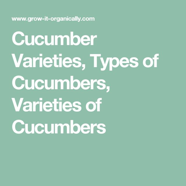 Cucumber Varieties, Types of Cucumbers, Varieties of Cucumbers