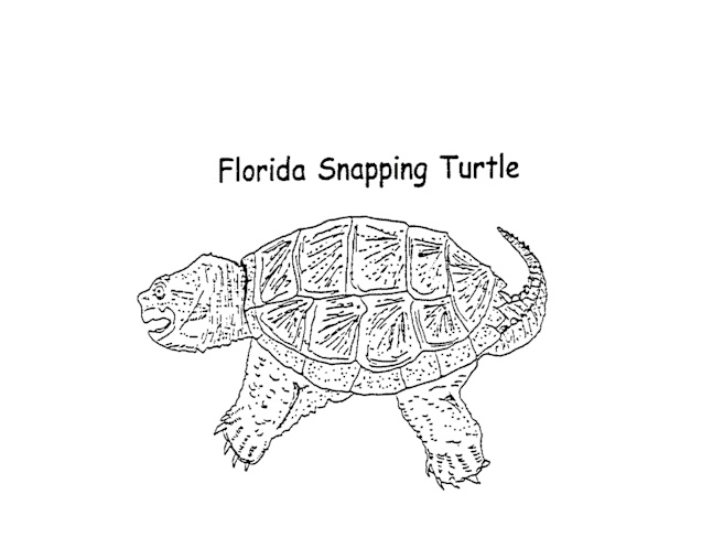 Snapping Turtle Coloring Page Color My Shell A Dark Greenish