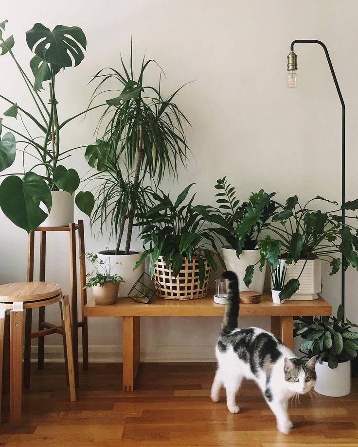 Jungle cat. #HaarkonHouse