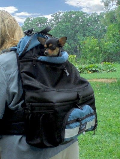 Dog Backpack...cute but expensive. If we ever start hiking regularly it might be a good idea.