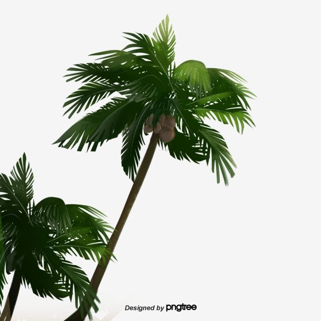 Cartoon Green Coconut Tree Cartoon Fruit Tree Tree Png Transparent Clipart Image And Psd File For Free Download Fruit Trees Trees To Plant Green Christmas Tree Decorations
