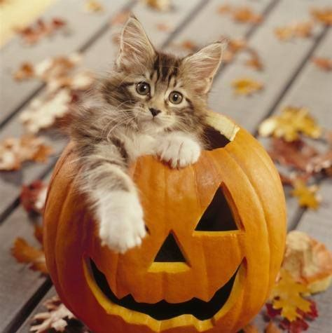 267 best Halloween cats images on Pinterest | Cute kittens ...