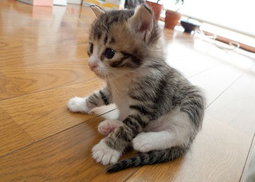 .: Cats, Animals, Kitty Cat, Pets, Adorable, Baby, Kittens