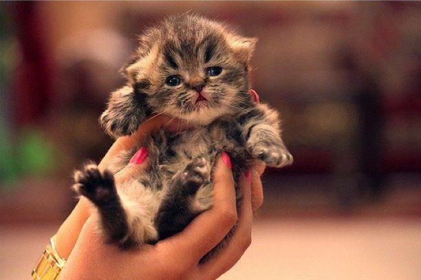 Best Feeling Ever Kittens Cutest Cute Animals Cute Cats