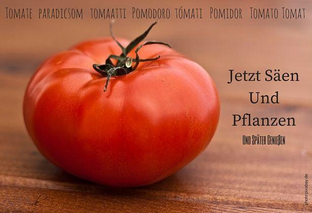 tomaten s en und pflanzen leicht gemacht. Black Bedroom Furniture Sets. Home Design Ideas