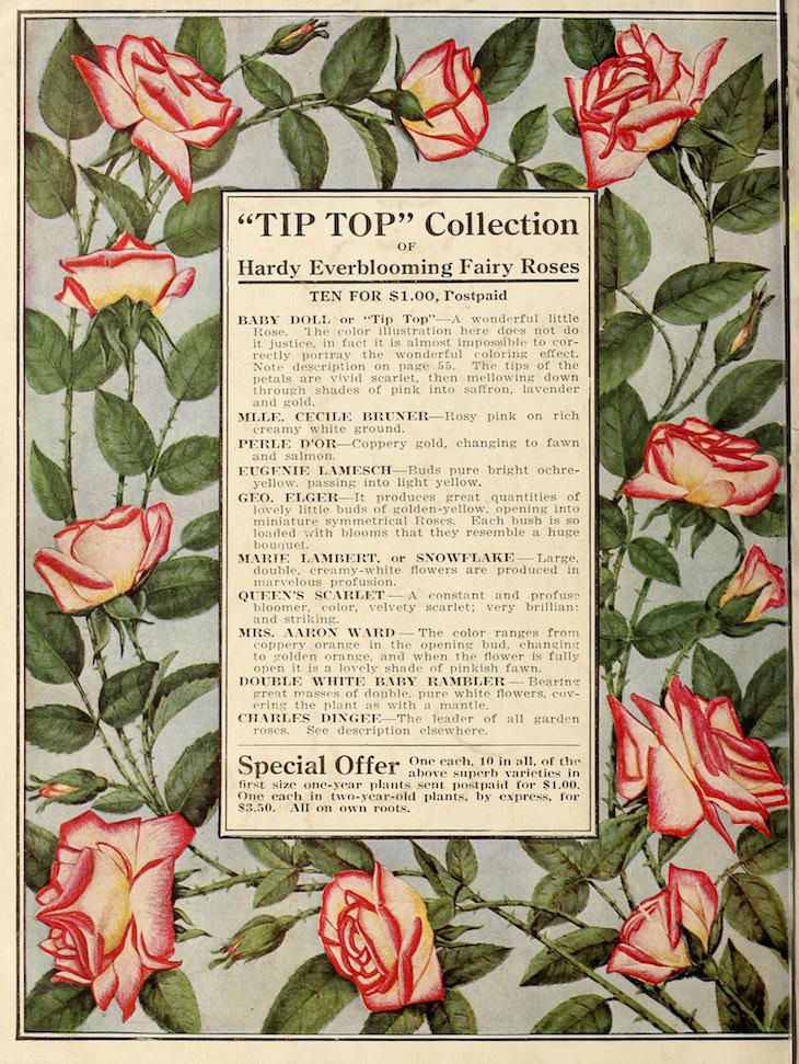 Wings of Whimsy: Antique Seed Catalogs Reinvented - 1918 Dingee Conard Seed Catalog #vintage #epehemera #freebie #printable #seed #catalog