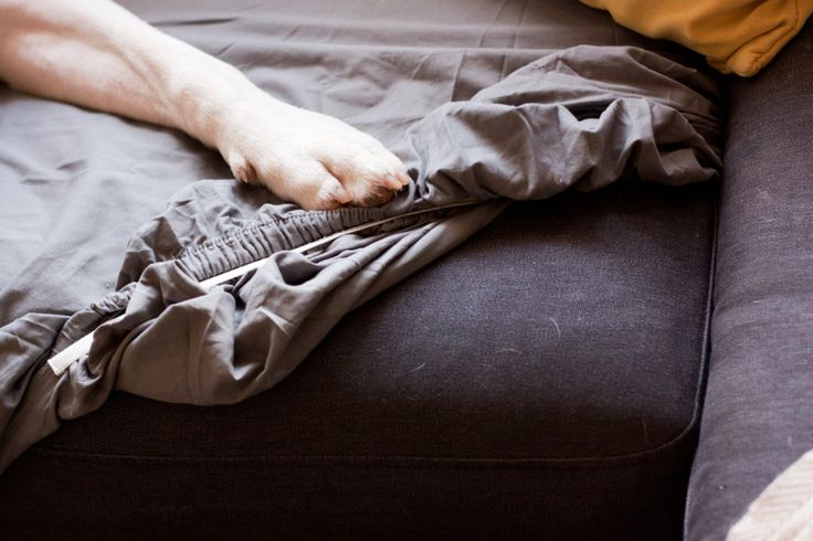 Pet Owner Hacks: Use A Fitted Sheet For A Quick & Easy Dog Couch Cover