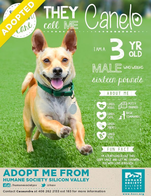 Dogs For Adoption Near Me The Best Dog 2018
