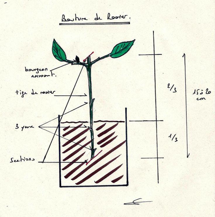 les 97 meilleures images du tableau les bouturers sur pinterest boutures jardin potager et. Black Bedroom Furniture Sets. Home Design Ideas