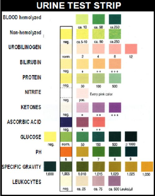 laboratory values and interpretation a nurse's ultimate guide diagram of glomerulus laboratory values and interpretation a nurse's ultimate guide nursing mnemonics pinterest medical, medical laboratory and nursing labs