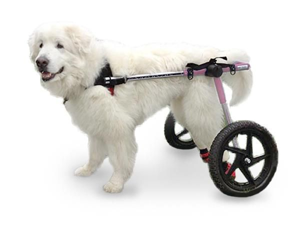 Dog Wheelchair Pink For Large Dogs 70 180 Lbs By Walkin