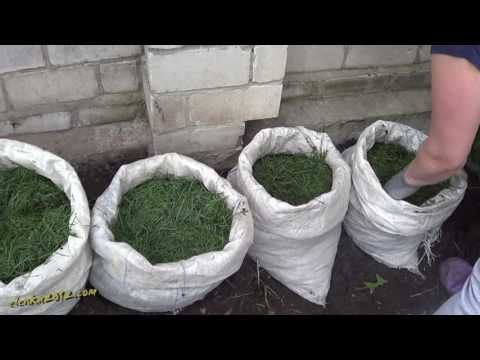 Выращивание картофеля в мешках - эксперимент - YouTube