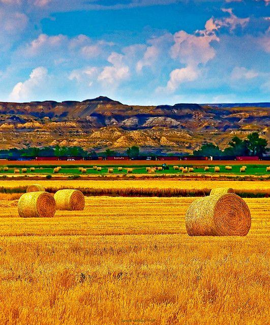 North Dakota Summer Field by JamesWatkins, via Flickr ... Beauty of the land ...