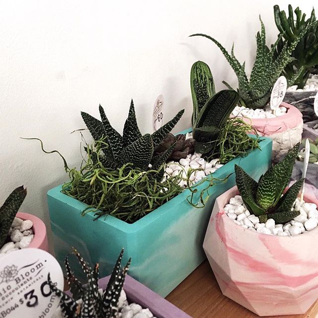 Sonic Bloom is here! A whole nook of these cute babies in handmade concrete planters! . Shop today from 11-6! . . . .