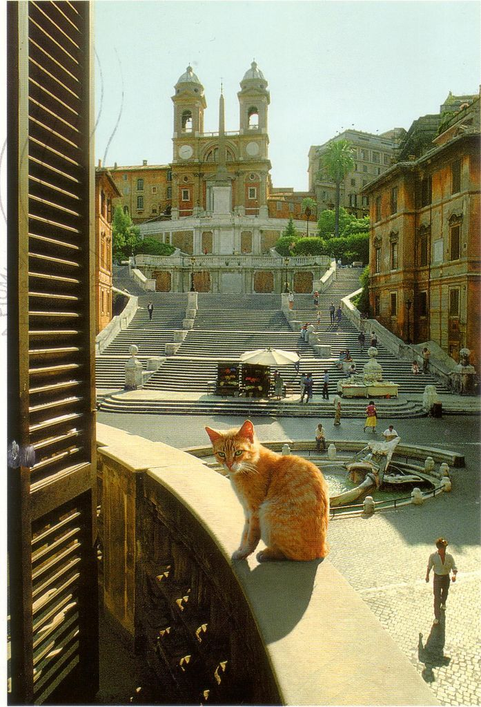 gatti di roma cats of rome by giancarlo gasponi photography pinterest rome cat and animal. Black Bedroom Furniture Sets. Home Design Ideas
