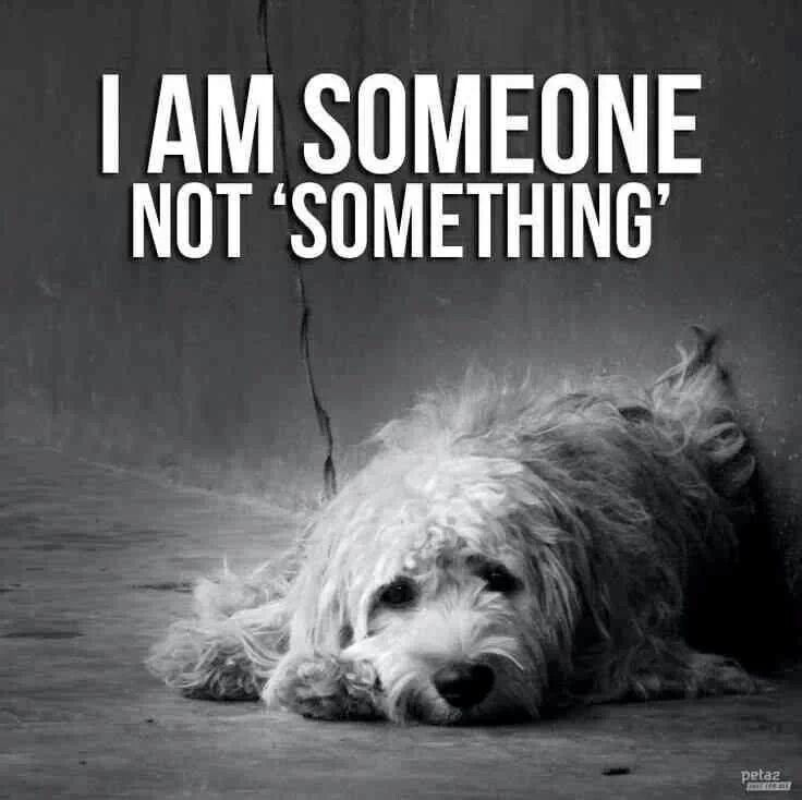 I am someone, not 'something'. Stand up for animal abuse.