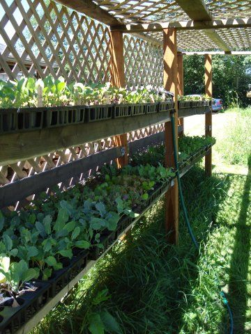 Ideas for attractive shade tunnels for veggie patch in for Vegetable patch ideas